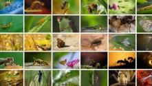 Insectos: los seres que mueven el mundo, en peligro | México Ambiental
