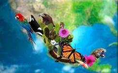 Qué Beneficios Obtiene México de su Biodiversidad? - Lifeder