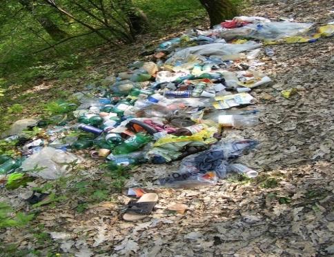 Ecología, bosque, basura, verde, reciclaje, naturaleza, medio ambiente,  contaminación, problemas ambientales, conservación ambiental | Pxfuel