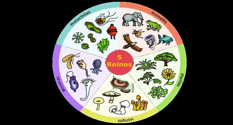 El reino animal   Vertebrados: los animales más evolucionados