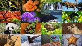 CONSERVACION DE LA BIODIVERSIDAD, DIVERSIDAD BIOLOGICA, EDUCACION AMBIENTAL