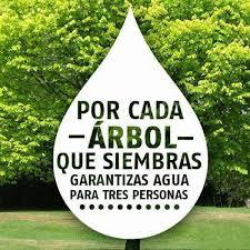 Planta & Canta - Sin agua morimos, sin árboles no hay agua, o sea... |  Facebook