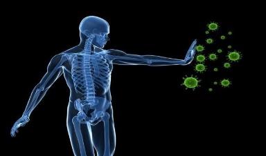 Un vistazo a cómo se prepara el sistema inmunológico para combatir las infecciones