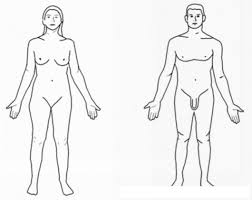 Dibujo De La Figura Humana De Mujer Y De Hombre | COLOREAR DIBUJOS VARIOS | Dibujo De La Figura Humana De Mujer Y De Hombre | dibujosa.com
