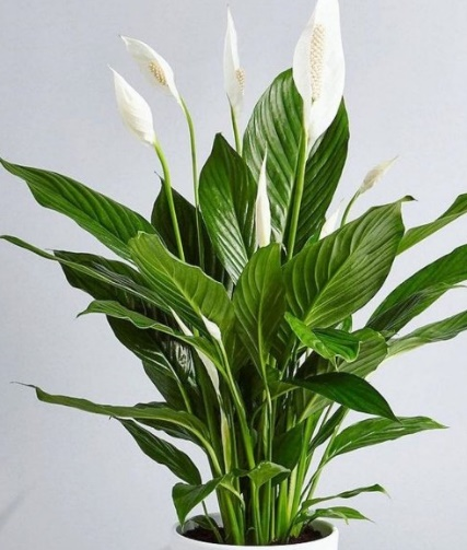 Plantas resistentes y fáciles de cuidar – Revista TQV